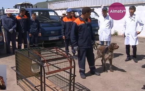 В Алматы общественники всерьез взялись за права животных