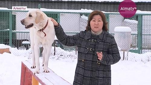 Алматинский пес по кличке Чарли Кинг стал героем уходящего года
