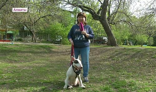 Намордник и совок с пакетом - новые правила выгула собак в Алматы