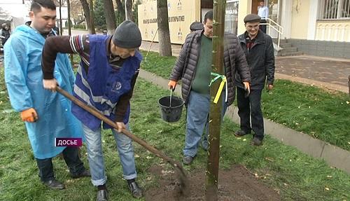 Благоустройство: до конца года в Алматы высадят более 30 тысяч деревьев