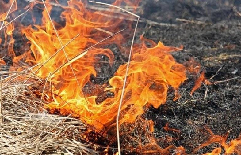 Более суток тушили пожар в предгорьях Жамбылской области