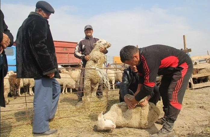 Где пройдут обряды жертвоприношения в Алматы