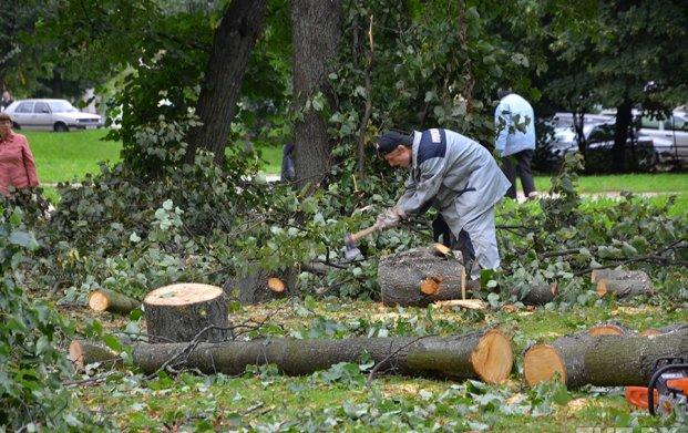 Чиновник открыл огонь из-за вырубки старых деревьев рабочими акимата Караганды