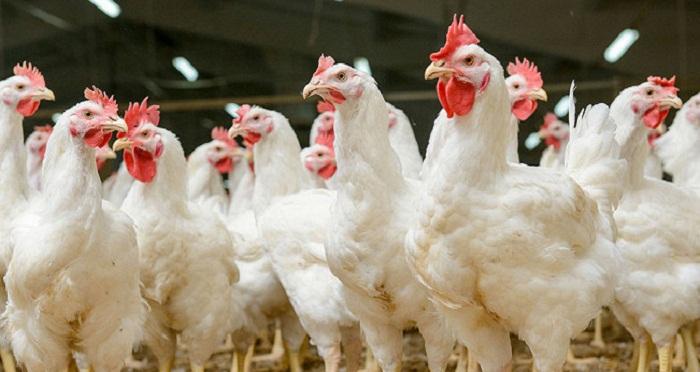 Запрет на ввоз в Кыргызстан казахстанского мяса неправомерен - Минсельхоз