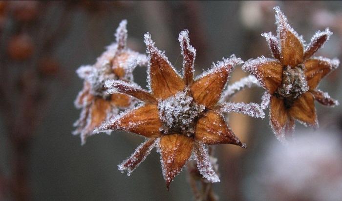 Снегопады и мороз ожидаются в Казахстане