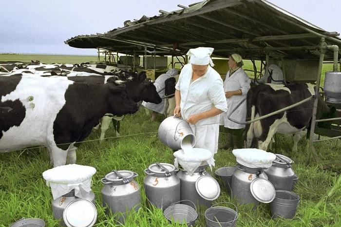 Казахстанское молоко могут запретить экспортировать в страны ЕАЭС