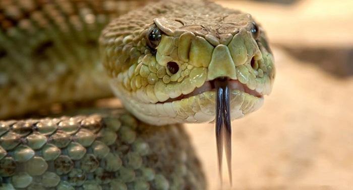 Змея пробралась в квартиру карагандинки