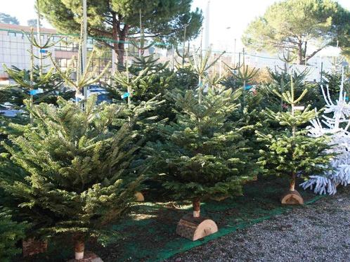 Названы цены на живые елки в Алматы