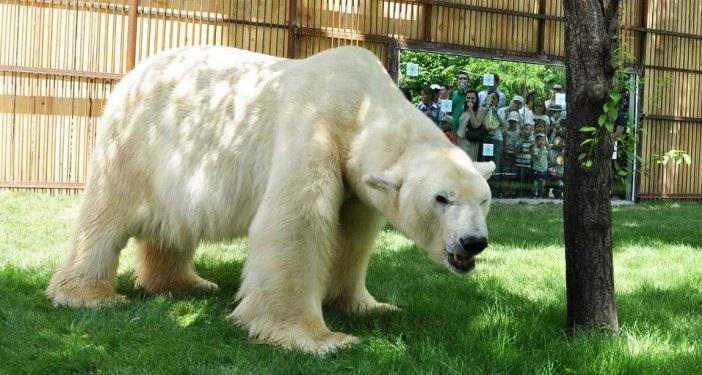 Старожил Алматинского зоопарка празднует день рождения