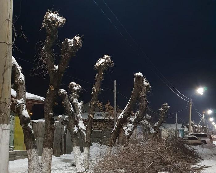 Вместо деревьев в Петропавловске оставили обрубки