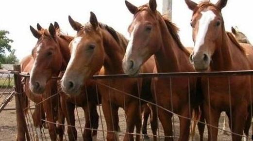 Контрабандисты пытались пересечь границу на краденых лошадях /подробности/