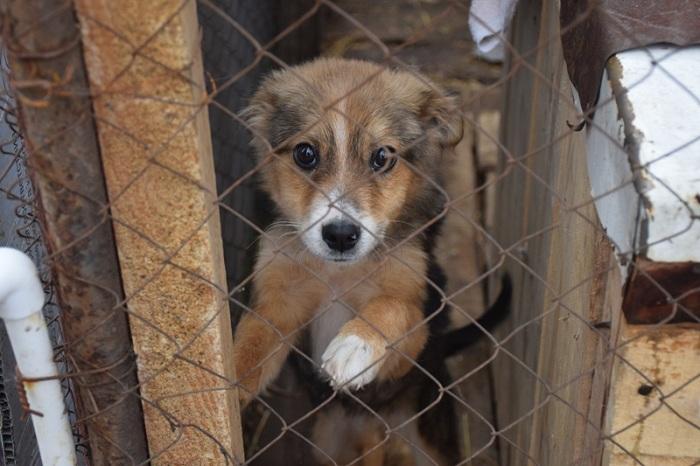 Вопрос создания приюта для бродячих животных в Петропавловске рассмотрят в 2019 году
