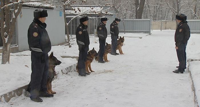 Биыл Алматыда 1 мыңға жуық қылмыс қызметтік иттердің көмегімен ашылған