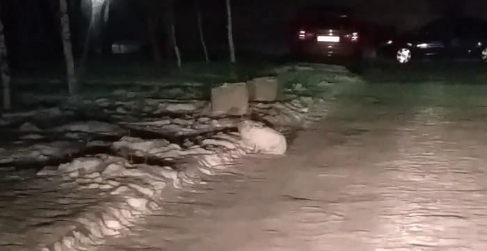 Заяц обосновался на парковке во дворе многоэтажек в Усть-Каменогорске (видео)