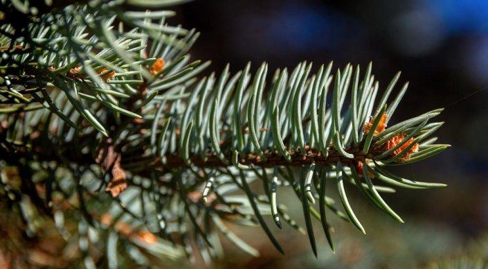 В зоопарк вместо свалки: алматинцев просят отдать новогодние елки животным