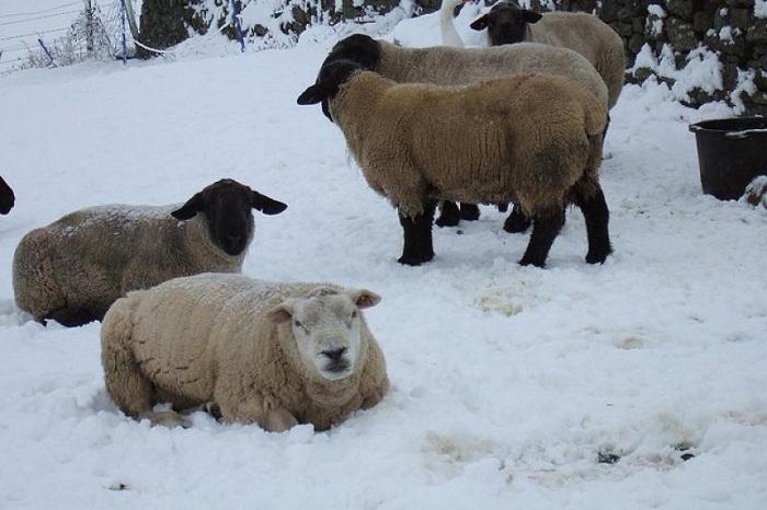 Более 300 голов овец угнали скотокрады в Алматинской области