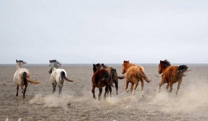 Второй раз украли лошадей у жителя Туркестанской области