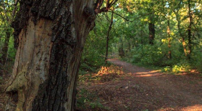 Вырубка деревьев и строительство запрещены - акимат об охране рощи Баума