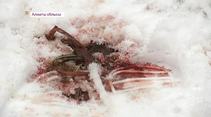Алматинский студент убит ножом в сердце