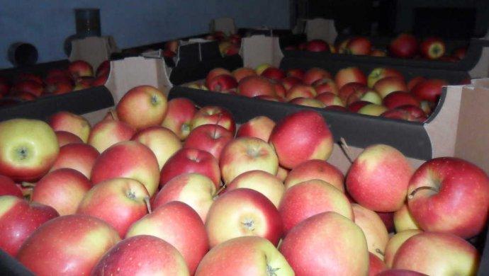 В Новосибирской области задержали казахстанские продукты