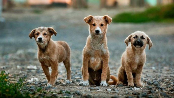 Бесплатную кастрацию и стерилизацию кошек и собак продолжат в Алматы
