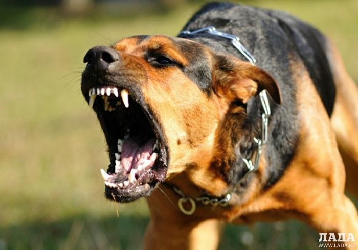 Искусанный собаками мужчина умер в Актау