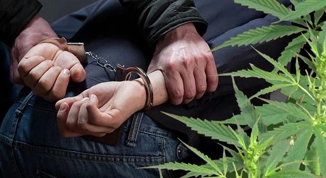 Спецоперация в Алматы: почти 30 кг марихуаны изъято из незаконного оборота