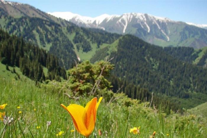 Новую модель управления нацпарками запустят в Казахстане