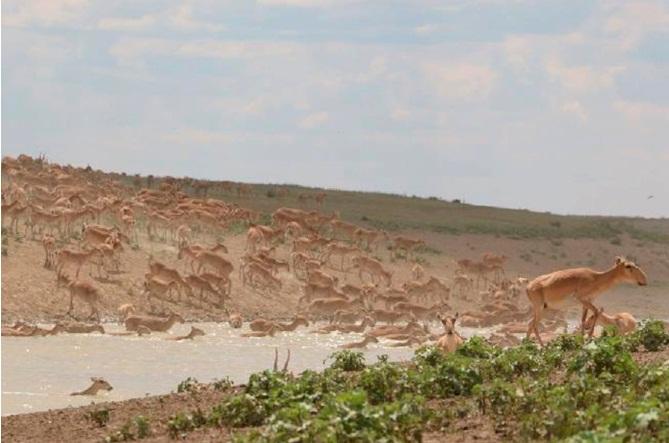 Три области охватят авиаохраной редких животных - Минсельхоз