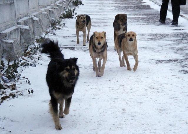 В ВКО собаки покусали более трех тысяч человек