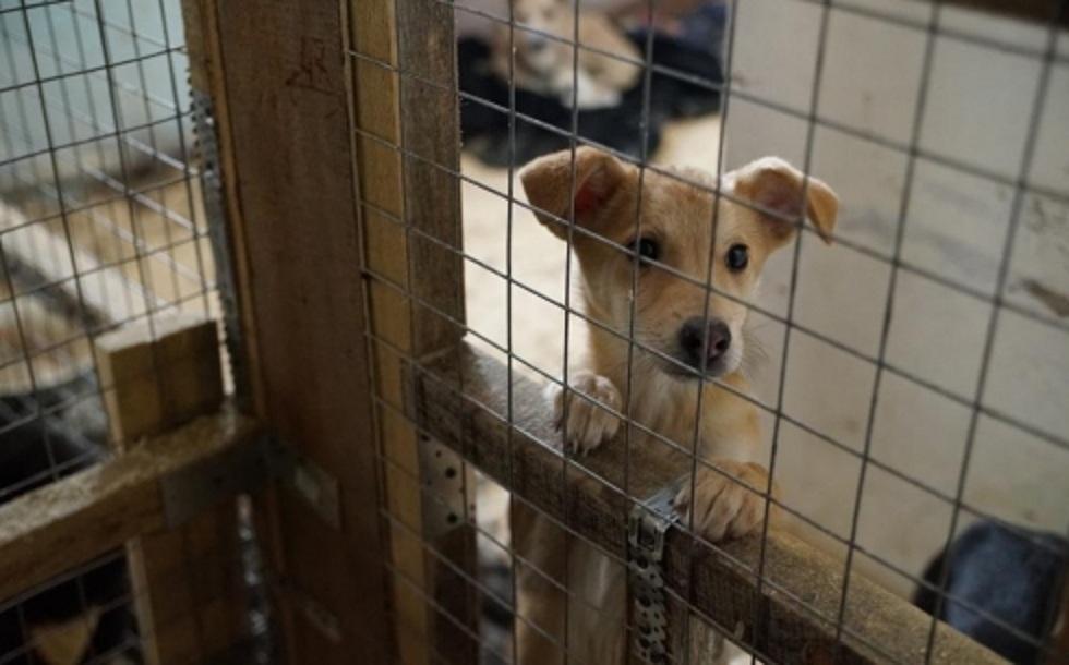 Ярмарка бездомных животных пройдет в Караганде