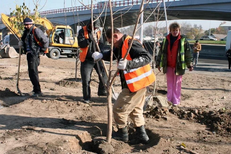 Более 12 000 деревьев посадят в Алматы в 2019 году