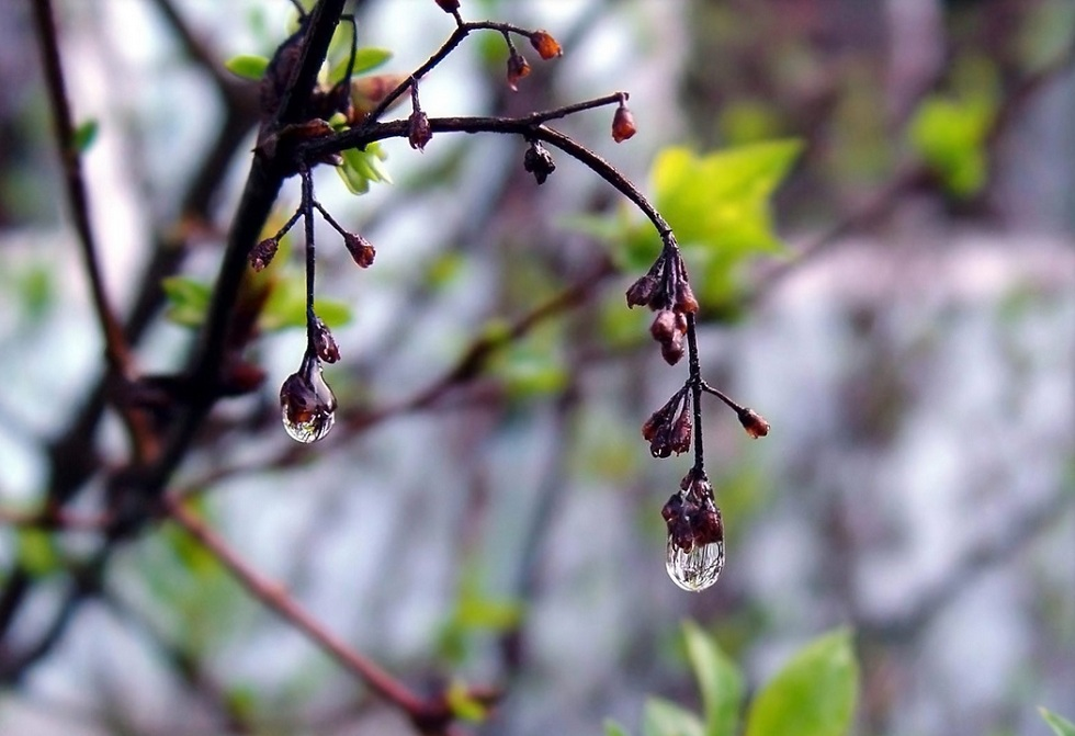 В начале апреля Алматы накроют дожди – Казгидромет