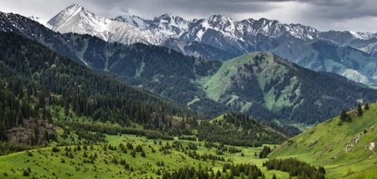 5 участков Иле-Алатауского парка отдадут в аренду