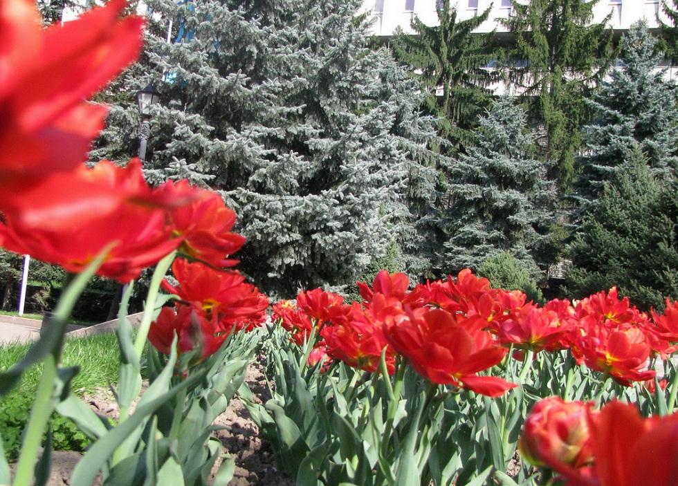 Погода в Алматы с 15 по 21 апреля 2019