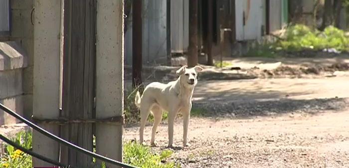 Для отлова бродячих животных внедрили гуманный и эффективный способ - ветеринары Алматы