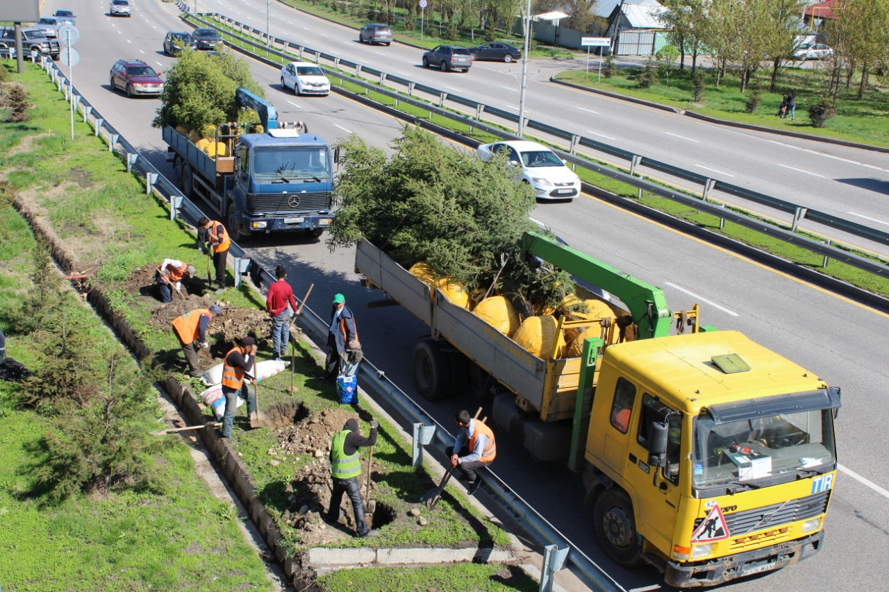 «Jasyl Meken» акциясы аясында Алматыда 7 мыңдай ағаш отырғызылды (ФОТО)