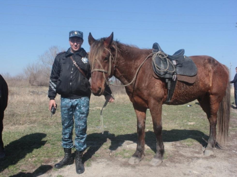 Дачи в Усть-Каменогорске патрулируют полицейские на лошадях