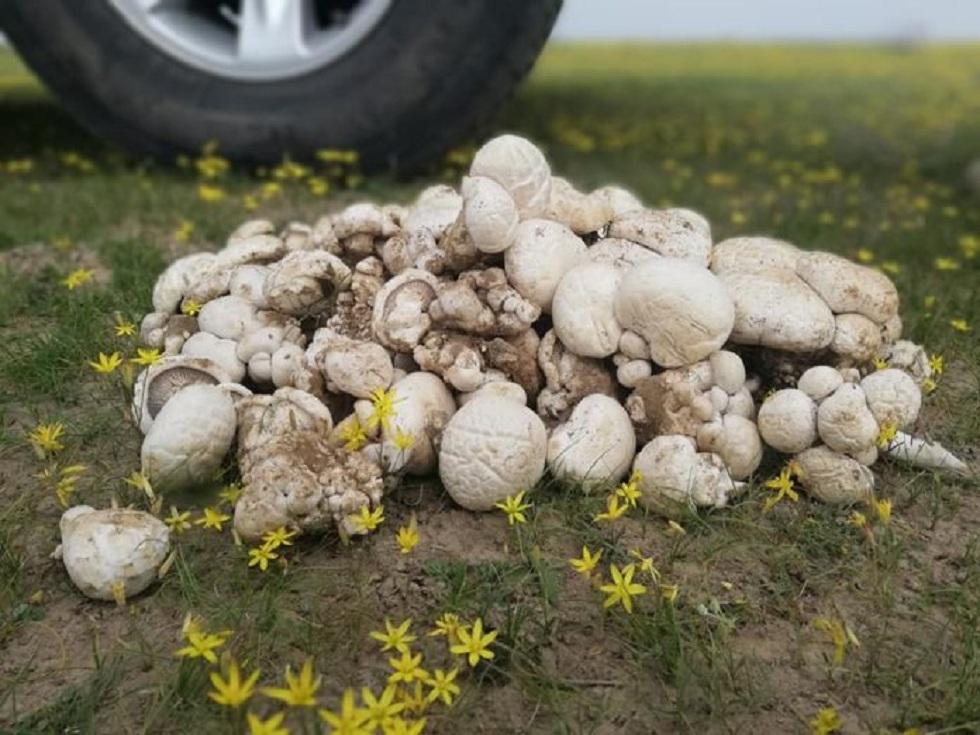 Около 20 человек отравилось грибами в Шымкенте с начала сезона