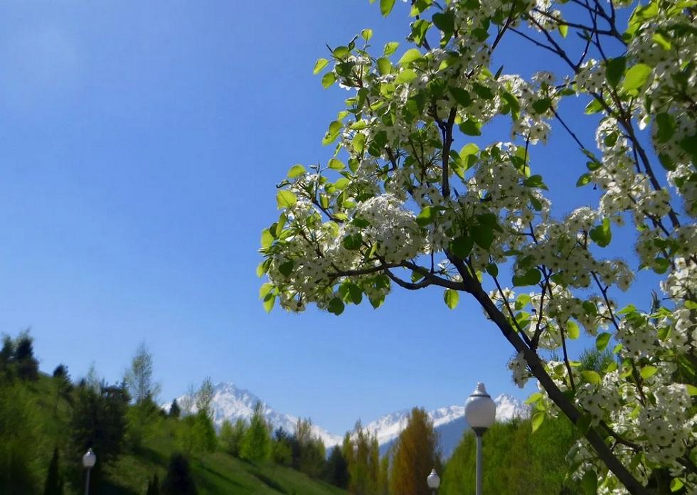 Погода в Алматы с 22 по 28 апреля 2019