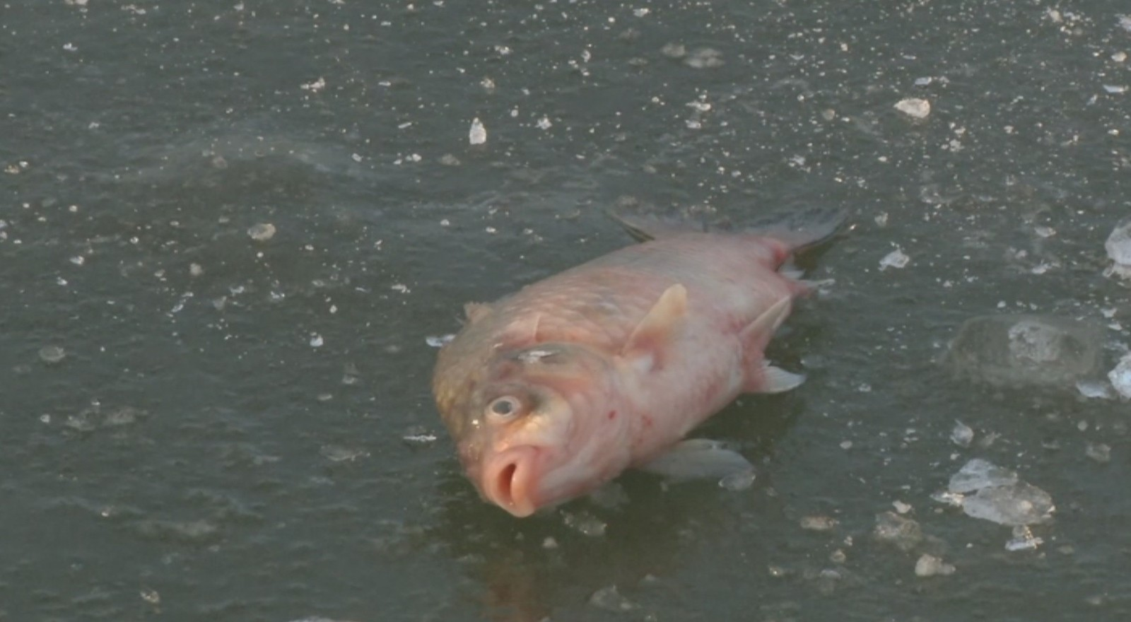Рыба погибла в озере близ Петропавловска