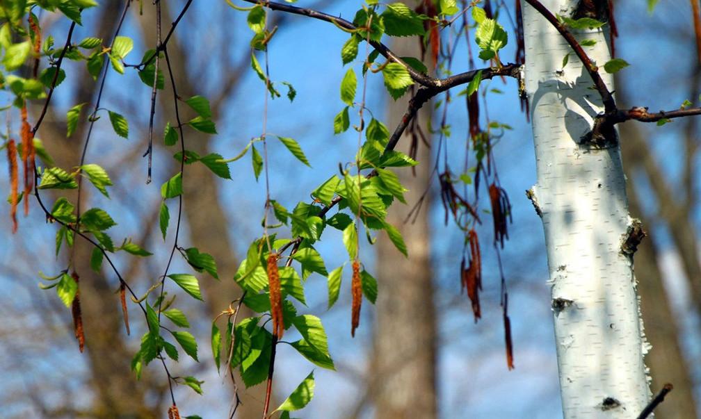 Жаркая погода ожидается на 9 мая на большей части Казахстана