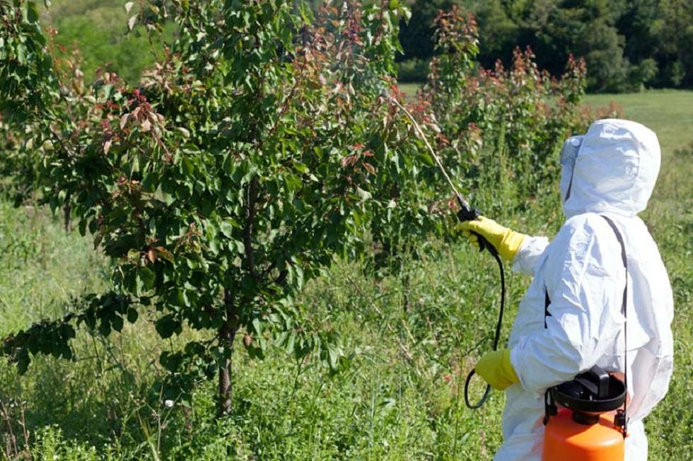 Отказаться от химической обработки зеленых насаждений намерены в Алматы