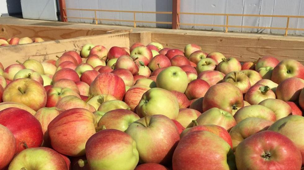 Запрет на ввоз из Кыргызстана картофеля, яблок и хурмы снят