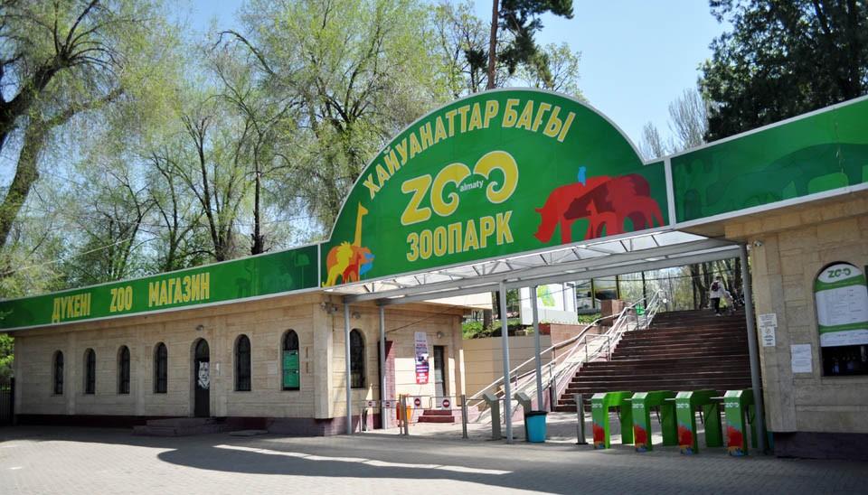 Новые вольеры для снежных барсов, медведей и волков скоро представят в Алматинском зоопарке