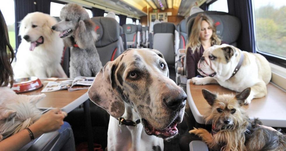 """Как провозить животных в поездах: советы от АО """"Пассажирские перевозки"""""""