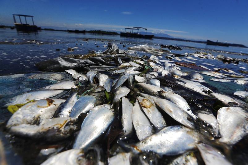 Это огромные потери - Президент о гибели рыбы в реке Урал