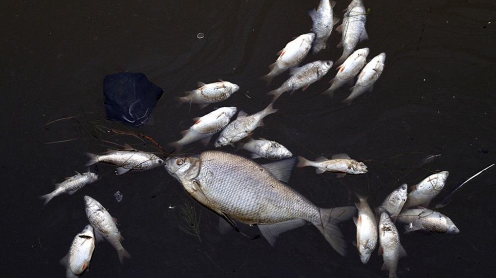 Установлена причина гибели рыбы в реке Урал