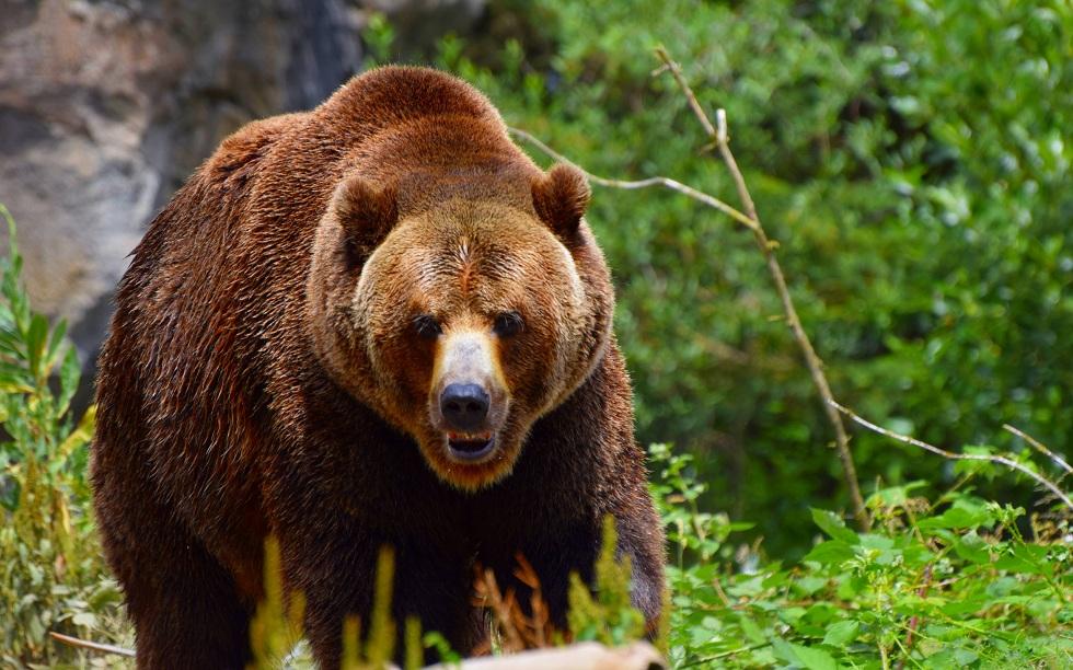 Житель Тувы откусил язык напавшему на него медведю