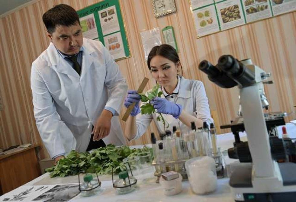 В Павлодарской области решили бороться с сорняком-аллергеном